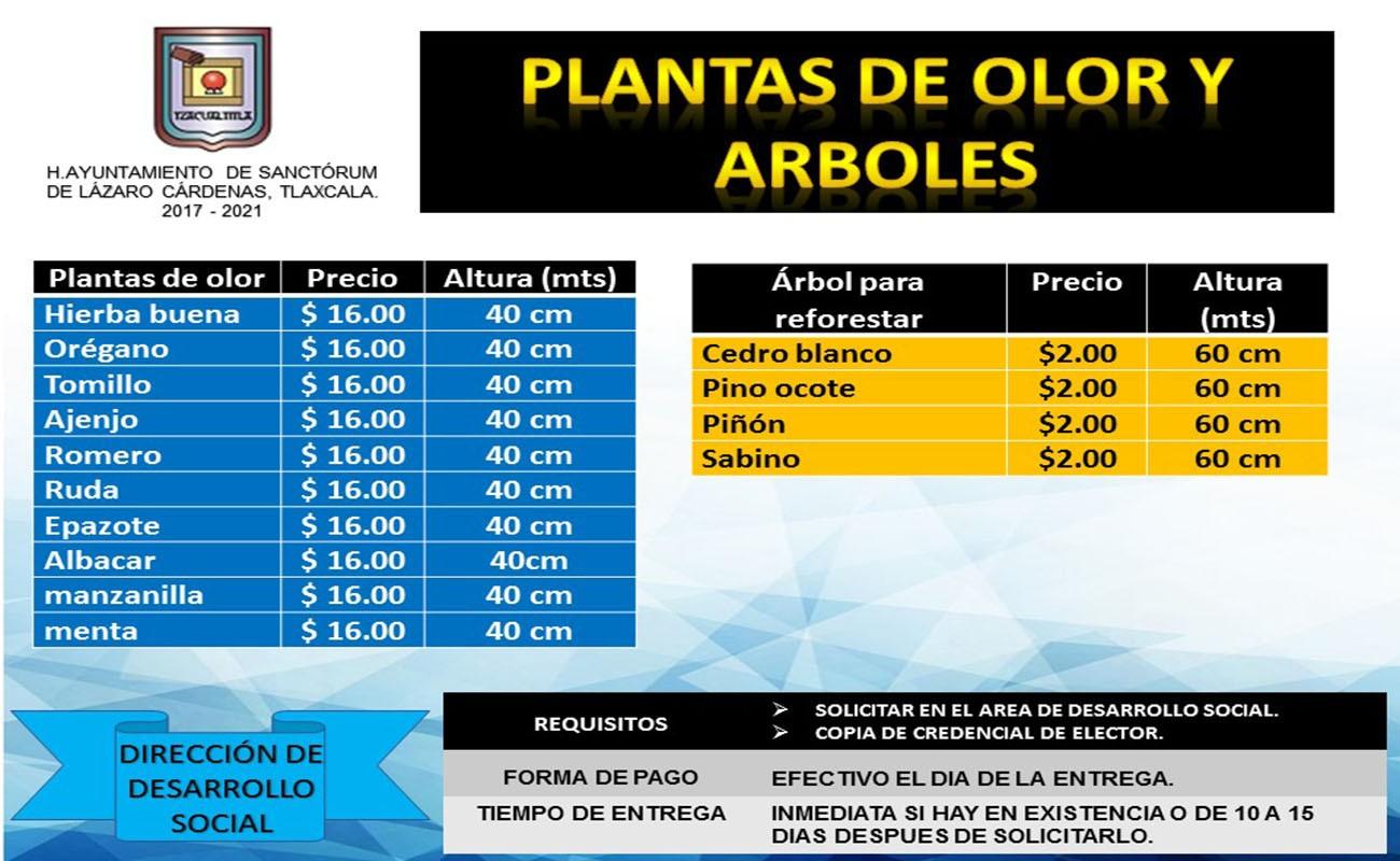 PLANTAS DE OLOR